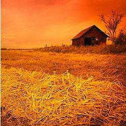 Ceylon Harvest